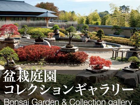 盆栽庭園コレクションギャラリー