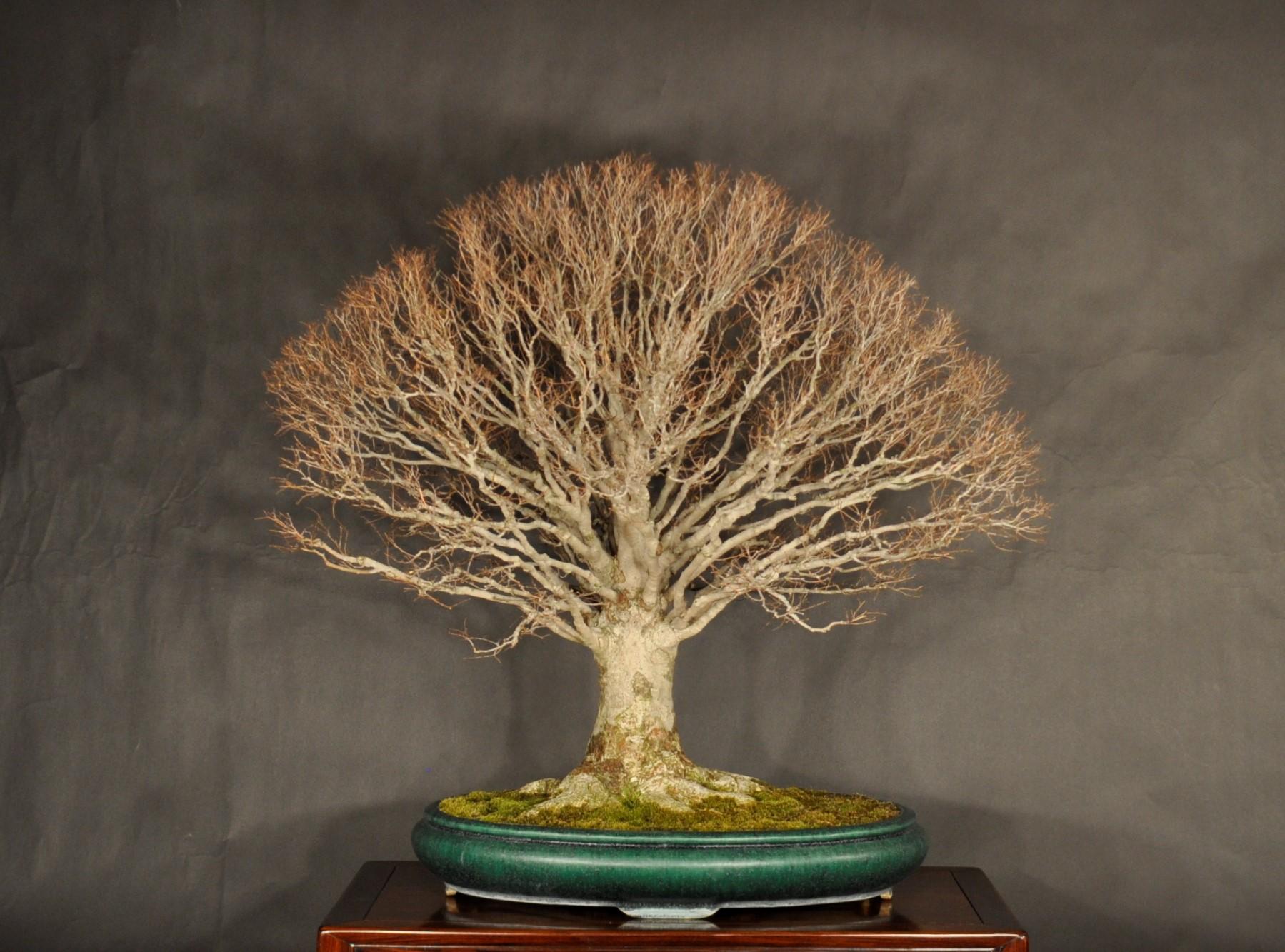 春季特別展「シリーズ・現代の盆栽家  竹山浩  ー自然を巡る、雑木の匠」