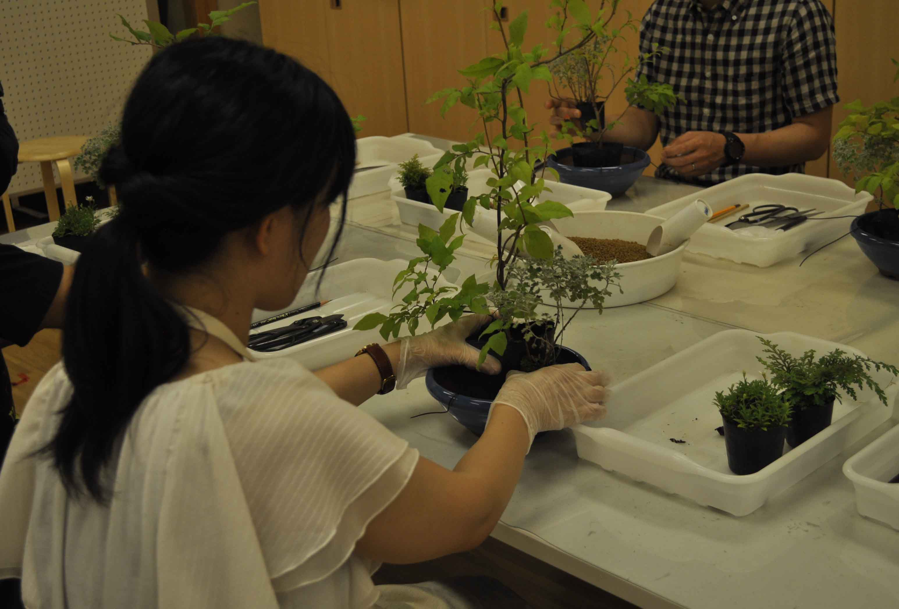 Bonsai Workshop  (July,August,September)